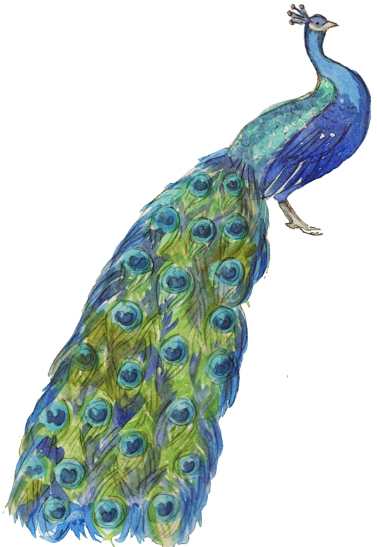 MC_Neville_Peacock